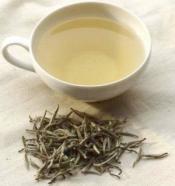 white-tea-benefits